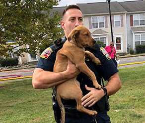 Animal Control Officer holding dog